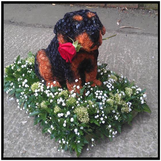 3D Dog Floral Tribute